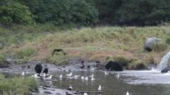 Mustakarhuja ja poikasta Arkistovideo