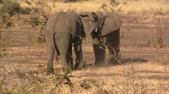 Angry elephant fighting Stock Footage