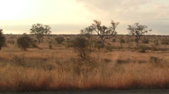African landscape with Elephant Stock Footage