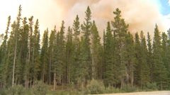 Forest fire, along mountain side, #20, tilt reveal Stock Footage