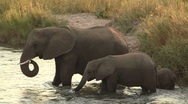 Elephant family crossing river Stock Footage