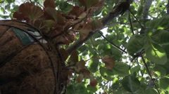 Hanging Plant Stock Footage