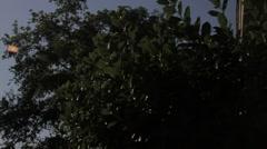 Tree Tops Pan Stock Footage