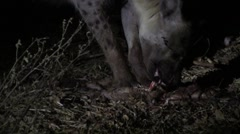 Hyena eating in the night Stock Footage