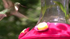 Hummingbird in Slow Motion - stock footage