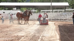 Draft horse sled pull champion team P HD 9749 Stock Footage