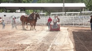 Stock Video Footage of Draft horse sled pull champion team P HD 9749