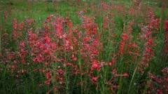 (1271) Beautiful summer wildflowers mountain wilderness meadow landscape Stock Footage