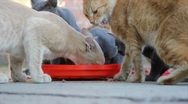 Stock Video Footage of Cats eat