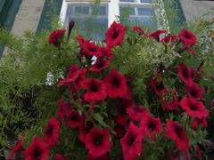 Window and Flower Box in Quebec City, Canada Stock Footage