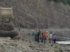 Joggins Fossil Cliffs- Bay of Fundy, Nova Scotia 1 Stock Footage
