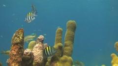 Pillar Coral Stock Footage