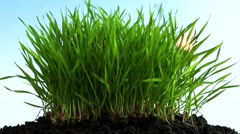 Grass blown down by the wind Stock Footage