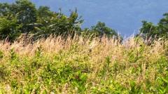 Meadow in wind Stock Footage