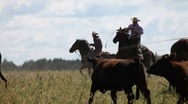 Stock Video Footage of Cowboy roping a bull