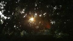 Dusk Tree Stock Footage