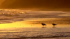 Two seagulls on a sandy beach at sunset Stock Footage