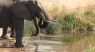 Stock Video Footage of Two drinking elephant at river