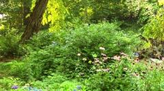 Luxuriant garden Stock Footage