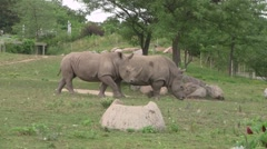 Two Rhinos walking across the grass Stock Footage