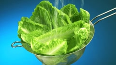 Washing romaine lettuce leaves in a sieve Stock Footage