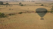 Stock Video Footage of Cape Buffalo and Hot Air Balloon Shadow