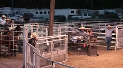 Rodeo calf roping missed P HD 9806 Stock Footage