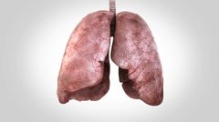Breathing lungs Stock Footage