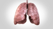 Stock Video Footage of breathing lungs