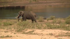 Elephant next to river Stock Footage