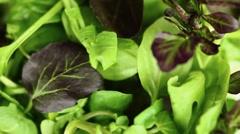 Lettuce leaves (macro zoom) Stock Footage