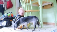 Baby feeds jumpy old dog Stock Footage