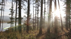Pine tree forest dolly with river at sunrise - stock footage