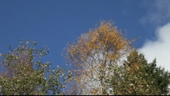 White clouds are frawing over a tree in autumn Stock Footage