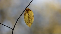 Single yellow leaf moving in autumn breeze Stock Footage