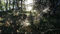 Spiderwebs glittering in autumn sun Stock Footage