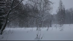 Winter storm in a forest Stock Footage