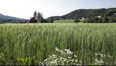 Barley field (Hordeum vulgare) and rolling hills Stock Footage
