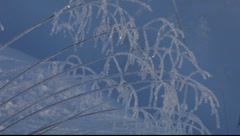 Hoarfrost-covered grasses moving in winter wind - stock footage