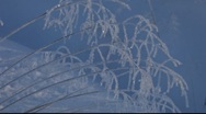 Stock Video Footage of Hoarfrost-covered grasses moving in winter wind