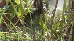 Close-up of a strimmer head cutting through weeds Stock Footage