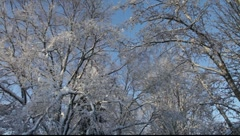 Snow covered trees are moving slowly in a winter wind - stock footage