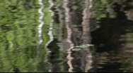 Stock Video Footage of Trees and plants are reflected in a lake
