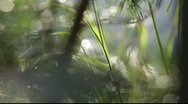 Stock Video Footage of Grasses moving in front of a glittering lake