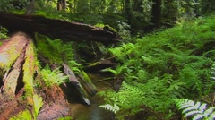 Redwood Forest and Stream Stock Footage