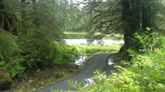 Temperate rain forest, trail Stock Footage