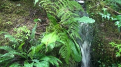 Temperate rain forest, waterfall Stock Footage