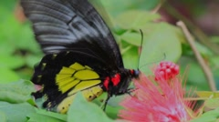 Butterfly2 Stock Footage