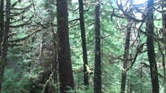 Temperate rain forest, Stock Footage
