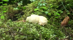 Temperate rain forest, slug Stock Footage
